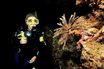 Night Diving at Tarvis Dive Center
